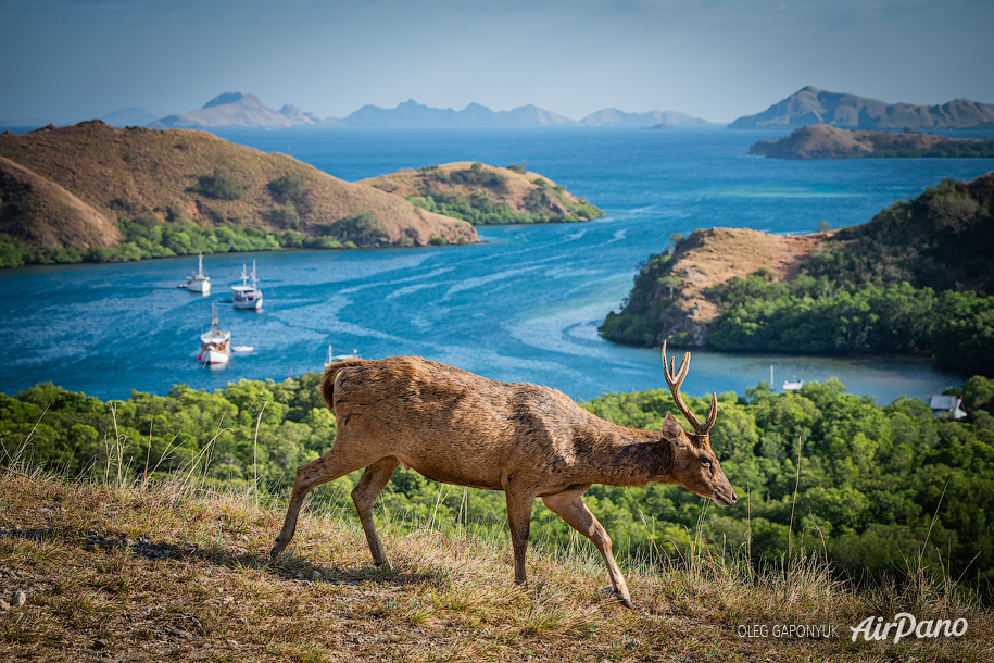 Journey to Komodo island, Indonesia
