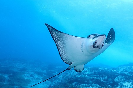 Diving with turtle, stingray and jellyfish