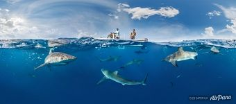 Split-panorama with sharks